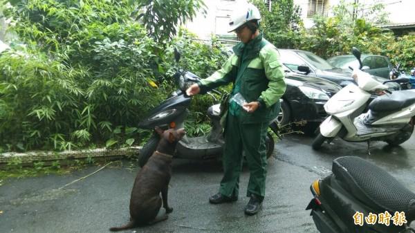 最近台北郵局效法奧地利的「與狗狗做朋友」方案,讓郵差用零食和狗狗打好關係。而專家也表示每隻狗的個性不同,成效也會不同。(資料照,記者黃立翔翻攝)