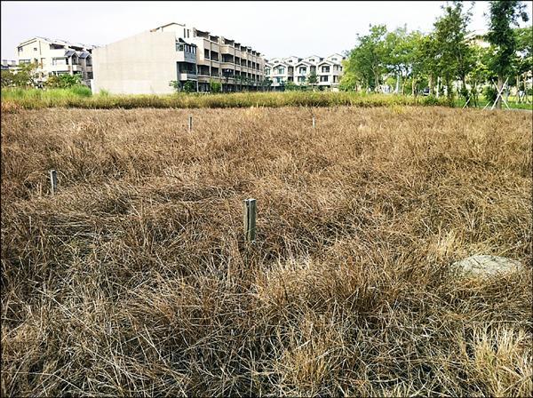 圖為宜蘭縣縣政中心住宅區,使用除草劑後導致一片枯黃的景象。(宜蘭縣環保局提供)