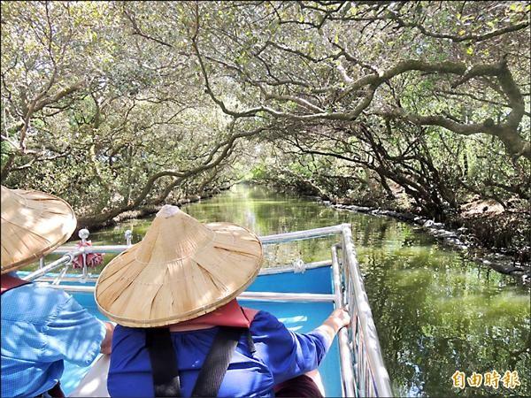 安南區四草竹筏港紅樹林綠色隧道,在台片《愛琳娜》入鏡。(記者王俊忠攝)