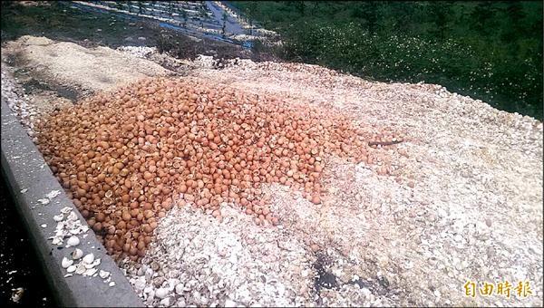 嘉南大圳濁幹線巡防道虎尾新吉里至三合里段遭傾倒臭雞蛋及蛋殼。(記者廖淑玲攝)