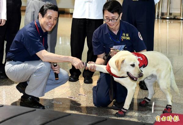馬英九今天開心與緝毒犬握手,不料緝毒犬卻不給面子,專家也打臉,此舉恐影響緝毒犬的判斷力。(記者朱沛雄攝)