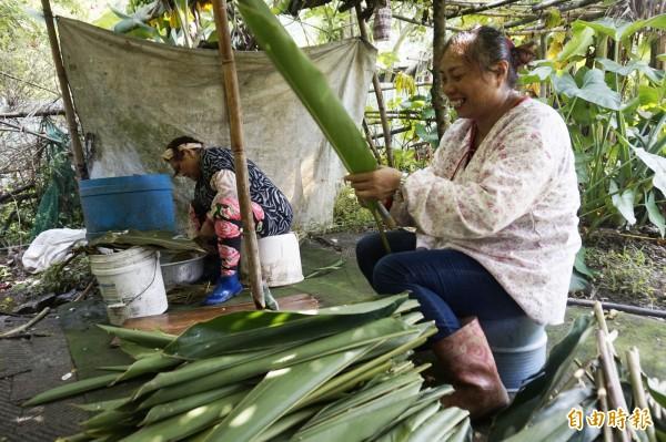 阿美族婦女黃新妹(右)熟練地割除葉片,準備製作道地的月桃粽給一家十口品嘗。(記者張安蕎攝)