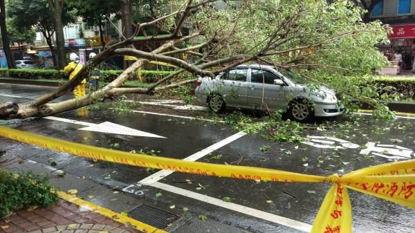 台北市下午一場暴雨,造成路樹傾倒砸中行經轎車。(記者劉慶侯翻攝)