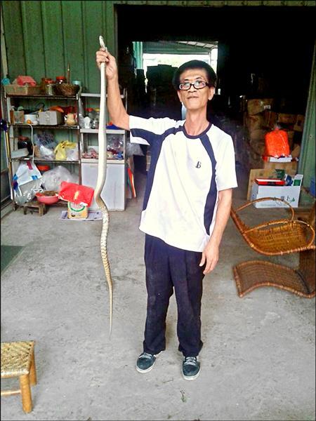 抓蛇達人蔡篤旺因到處抓蛇被檢舉,以違反野生動物保育法之名接受約談。(取自網路)