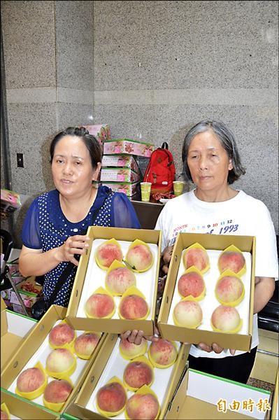 今年拉拉山水蜜桃雖然賣相不錯,但價格也貴了二成。(記者謝武雄攝)