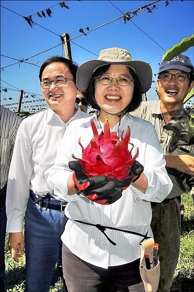 民進黨主席蔡英文昨走訪卑南鄉紅龍果園,了解基層農民心聲。(記者張存薇攝)