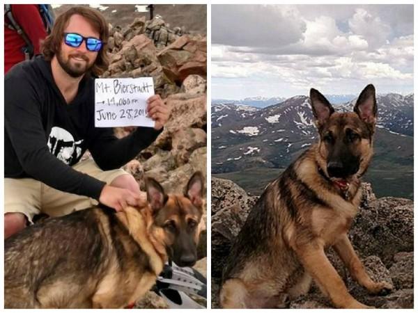 哈德曼(左)遭雷擊大難不死,都是因為他的愛犬藍寶(右)在一旁幫他「吸電」,可惜藍寶為此犧牲了。(圖取自紐約每日新聞)