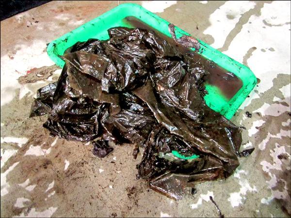 從短肢領航鯨「小梧子」胃內取出的塑膠袋,若不細察易被誤以為是海帶。(成大鯨豚中心提供)