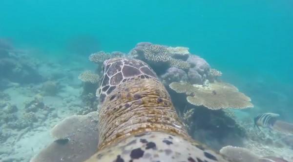 網路最近瘋傳一部影片,帶大家以「浦島太郎」視野一窺海底世界的奧妙。(圖擷取自臉書Revista Galileu粉絲專頁)