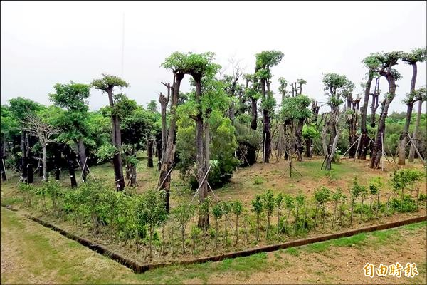 樹木銀行將不再是樹的銀行,將改成森林遊樂場,成為民眾新的休憩點。(記者蘇金鳳攝)