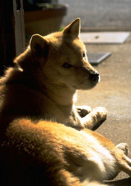 30多歲的林女,去年底承租新北市三重區三和路套房,但搬進去第一天,愛犬從早到晚叫個不停,詢問鄰居才得知,該套房是凶宅。示意圖,與本新聞無關。(情境照)