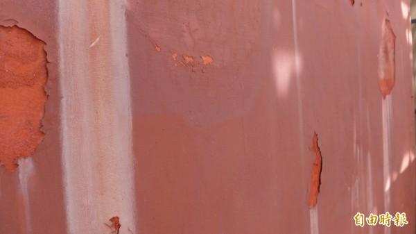 國定古蹟紅毛城進行修繕工程,圖為待修繕的外牆,最外層為防水漆,下一層則是土硃灰壁,可以看到明顯的顏色差異。外層防水漆在風吹日晒雨淋情況下,和當年初修繕完成的樣貌已有很大的不同。(記者李雅雯攝)
