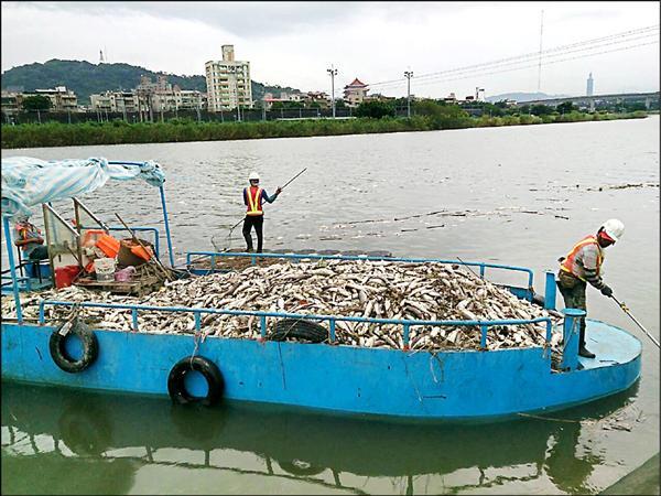 基隆河士林區社子大橋至承德橋段,昨天發生大量魚群暴斃。(市議員何志偉服務處提供)