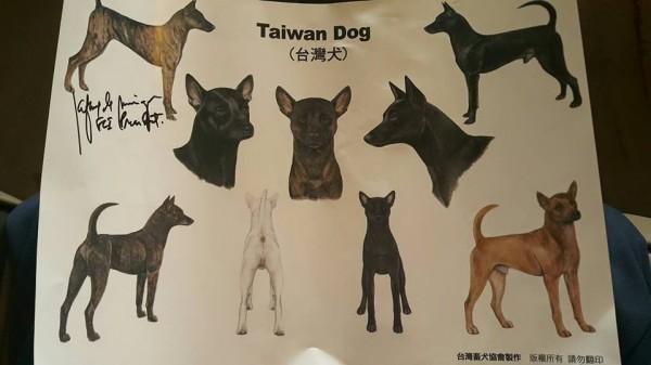 過去被認為是混種米克斯的「台灣土狗」通過國際正名為「台灣犬」(Taiwan Dog)。(圖擷自《台灣畜犬協會Kennel Club of Taiwan》臉書專頁)