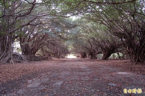 新營長勝營區ㄇ字形綠隧,台南市都發局提出細部開發修改,綠隧全區保存。(記者楊金城攝)