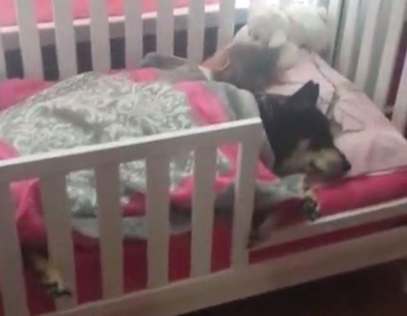 雷文和女嬰一起躺在床上互相依偎著的畫面,讓不少網友直呼太溫馨了!(圖擷取自臉書影片)
