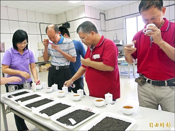 鹿野紅烏龍金牌獎一字排開,讓茶農品評。(記者王秀亭攝)