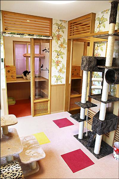 日本東京出現高級貓旅館,住宿費用直逼人類住的民宿或商務旅館。(取自網路)