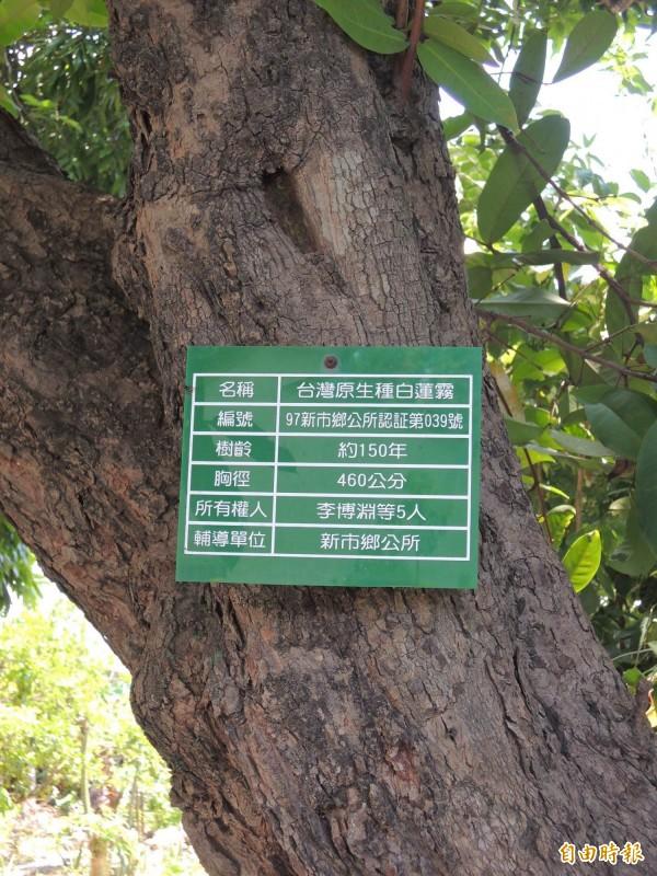 透過紀錄列冊,瞭解老樹的生長狀況。(記者林孟婷攝)