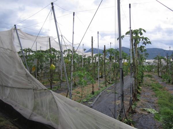 蘇迪勒颱風已造成屏東農損。(屏東縣政府農業處提供)