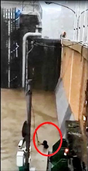 昨上午大稻埕碼頭疏散門下一名婦人站在水中抓著木棍,高喊「救命!」。(北市水利處提供)