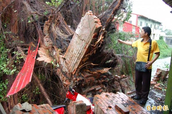 鹽水國中這棵大榕樹被吹倒,壓壞兩輛機車、壓毀學校圍牆,並砸中對岸大眾廟的後殿。(資料照,記者楊金城攝)
