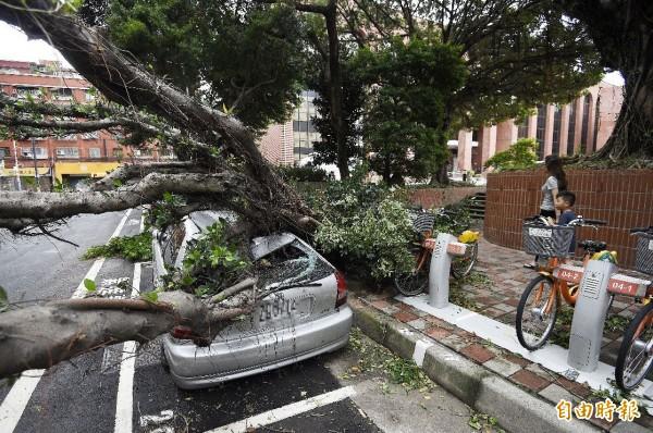 蘇迪勒颱風襲台,強勁的風勢與豐沛的雨量席捲全台,新北市板橋區的路樹轟然而倒,壓壞停在路旁的汽車。(資料照,記者陳志曲攝)