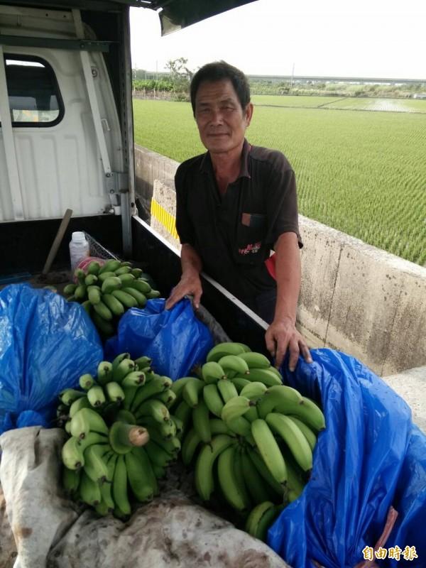 蕉農謝銘卿指著車上僅有4、5串的香蕉,不知如何是好。(記者陳冠備攝)