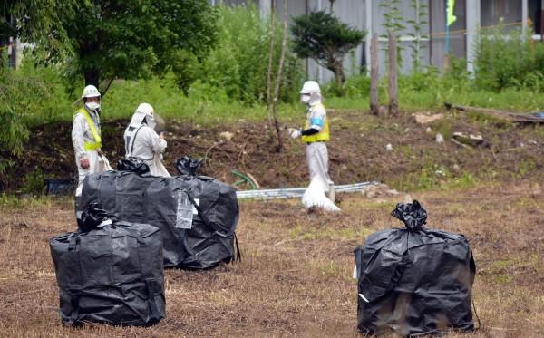 日本政府派出重型機械及許多工作人員深入災區,將受污染的土壤進行清理、打包。(法新社)