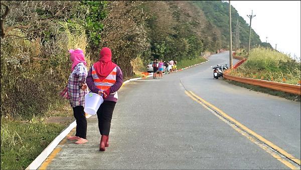 保育志工在環島公路旁穿梭尋找要過馬路的陸蟹。(綠島導遊曾靚提供)