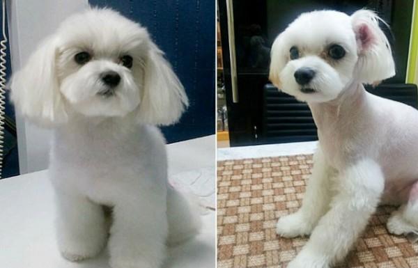 寵物整形風潮在南韓逐漸蔓延。(圖取自Pixable)