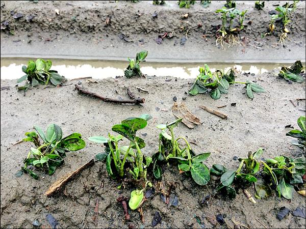 蘇迪勒颱風造成農業災害損失,彰化縣農民從本月14日到24日可以申報損失。(圖彰化縣政府提供)