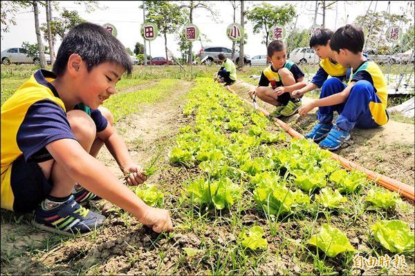官田國小除了在校內闢農場教學生種有機蔬菜,新學期起也將與其他國中小聯合採購有機蔬菜。(記者劉婉君攝)