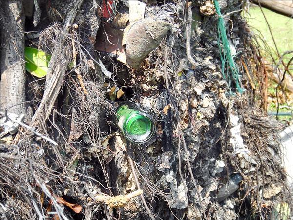 倒樹根部夾雜著玻璃瓶、鋁罐等垃圾。(圖由台灣親子共學教育促進會執行秘書陳玫儀提供)