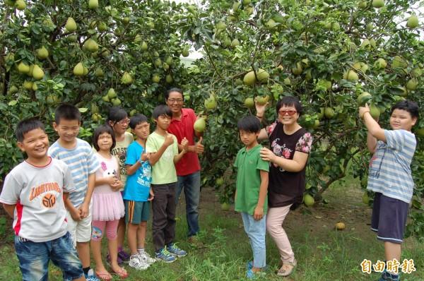 家扶兒到柚園認識麻豆文旦的生態和體驗採果。(記者楊金城攝)