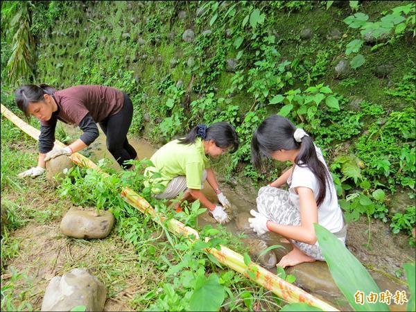 馬來西亞8名志工為協助保育台灣的梭德氏赤蛙,昨天在新竹縣大山背幫忙修水溝。(記者蔡孟尚攝)