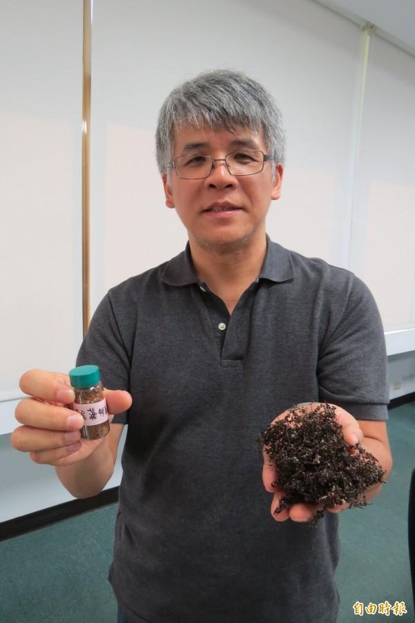 國立台灣海洋大學台灣藻類資源應用研發中心教授吳彰哲從馬尾藻中萃取多醣,經老鼠實驗發現「藻類硫酸多醣」不但能夠減緩登革熱症狀,更能有效預防出血性登革熱感染。(記者俞肇福攝)