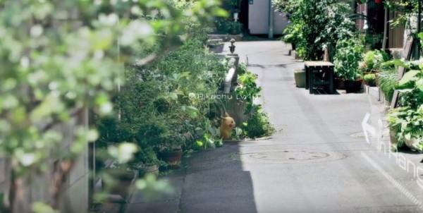 野生的皮卡丘出現在巷弄中,等待冒險者來收服。(圖擷取自Youtube)