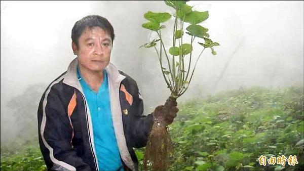 嘉義林管處最近發函葵農,提醒明年底全面剷除山葵。葵農說,雖正值收成,卻毫無喜悅。(記者余雪蘭攝)