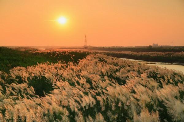 台南與嘉縣交界的八掌溪菅芒花盛開,攝影作品令人驚艷。(圖由方明章提供)