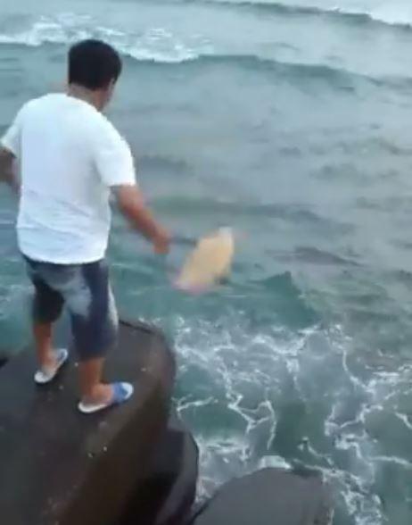 男子放生海龜影片引發爭議。(圖擷取自臉書)