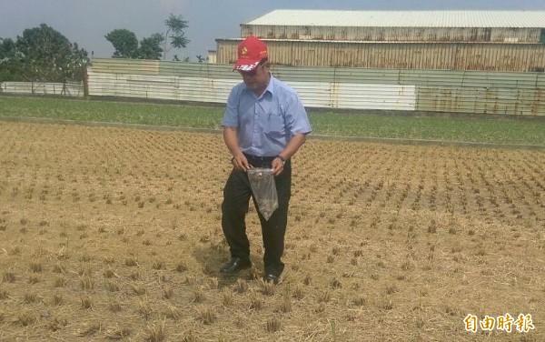 萬丹鄉長劉昭相到現場勘查,認為毒鳥是個人行為,多數農民都很善良。(記者葉永騫攝)