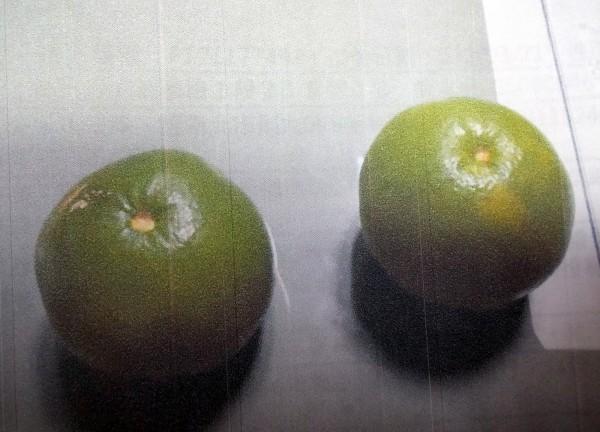 廖姓男子凌晨偷這2顆葡萄柚被果園主人當場活逮,葡萄柚沒吃到,先吃上竊盜官司。(記者蔡孟尚翻攝)