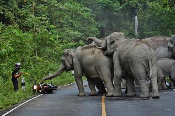 一名機車騎士在泰國拷艾國家公園區內,因機車引擎聲驚擾象群而慘遭圍困,騎士嚇到雙手合十彎腰求饒。(圖截自Khao Yai News臉書)