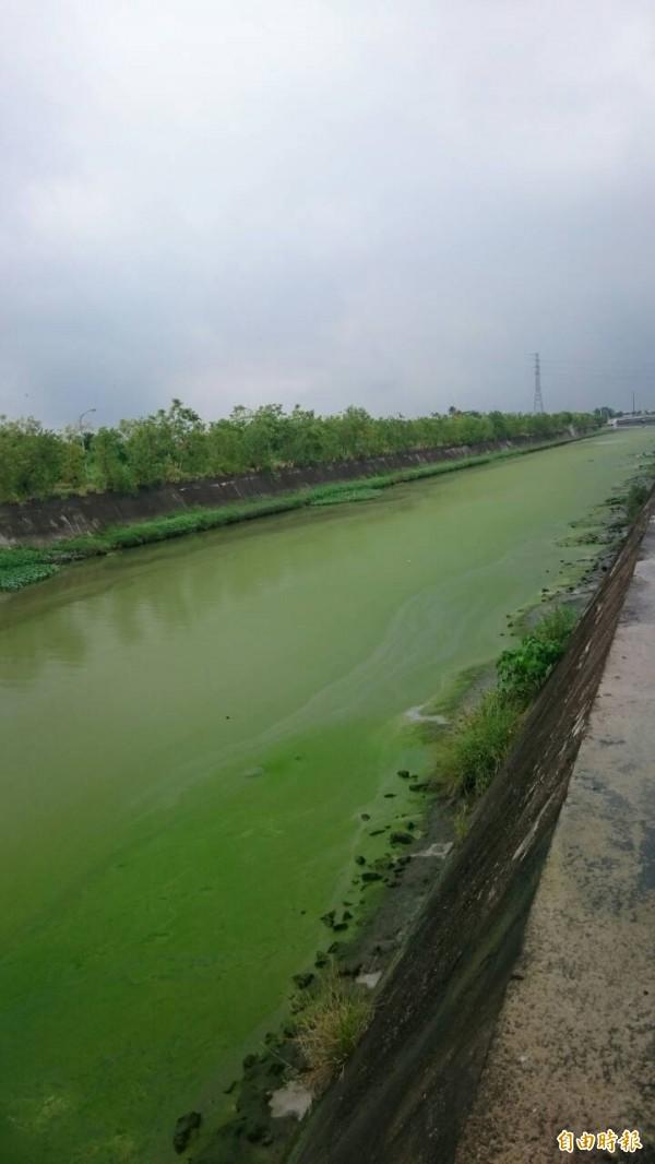 鹽水溪排水線呈綠色。(記者洪瑞琴攝)