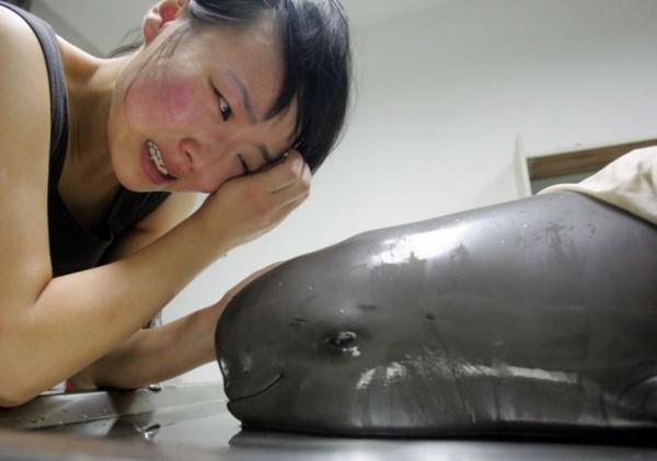 江豚數量比熊貓還少,被列為「極度瀕危」的物種之一。(資料照,圖擷自WWF Global網站)