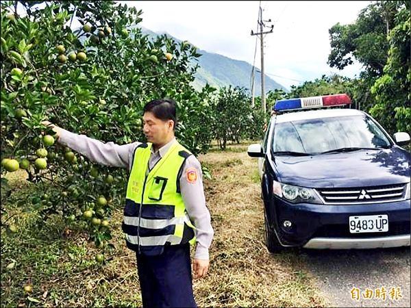 泰源地區大白柚進入產季,警方守護農民的血汗,啟動護果專案。(記者陳賢義攝)