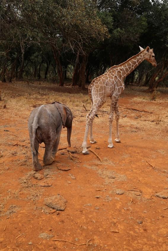 牠們克服「身高差」成為好朋友。(圖擷取自《Mashable》)