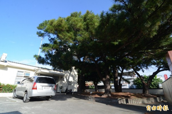 台東氣象站重建,保留114歲老松樹。(記者陳賢義攝)