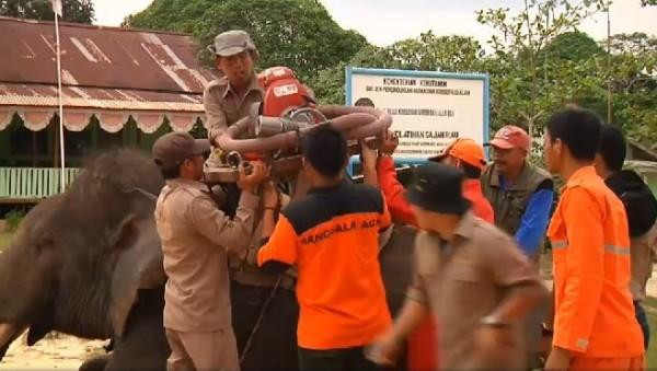 這些訓練有素的大象在經過進一步的訓練後,也能協助載運消防設備及消防人員。(圖擷自GlobalNews)